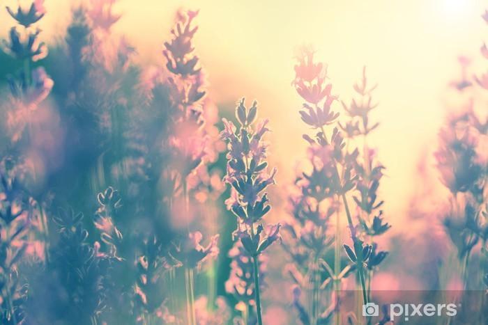 Naklejka Pixerstick Archiwalne lawendy słońca - Tematy