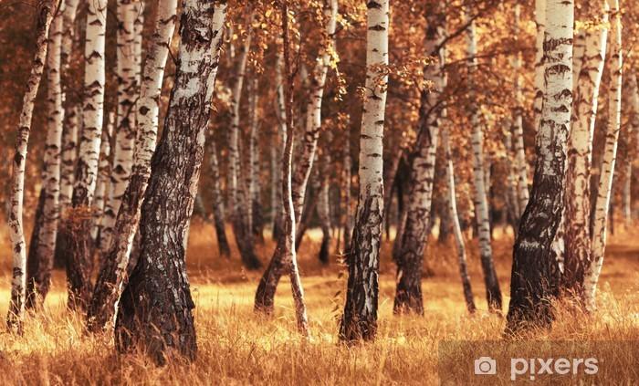 Papier peint vinyle Forêt de bouleaux en saison d'automne - Thèmes