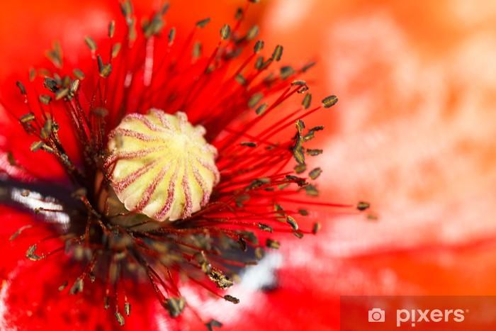 Nálepka Pixerstick Kvetoucí červený mák květiny makro - Květiny