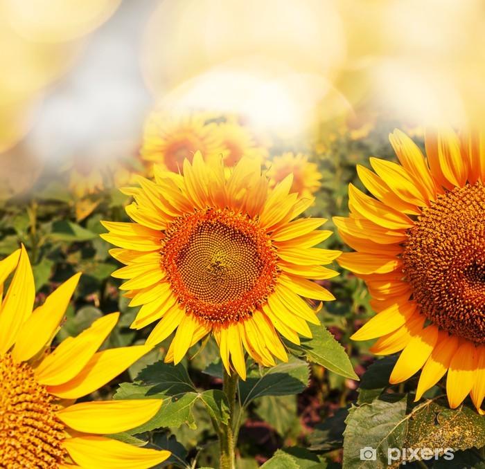 Pixerstick Aufkleber Sonnenblumen - Themen