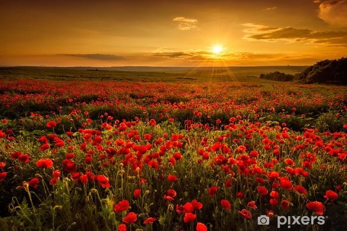 Papier peint vinyle Champ de pavot au coucher du soleil - Prés, champs et l'herbes