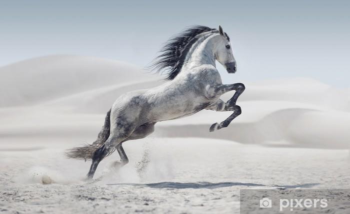 Fototapeta samoprzylepna Zdjęcie przedstawia galopujący koń biały - Ssaki