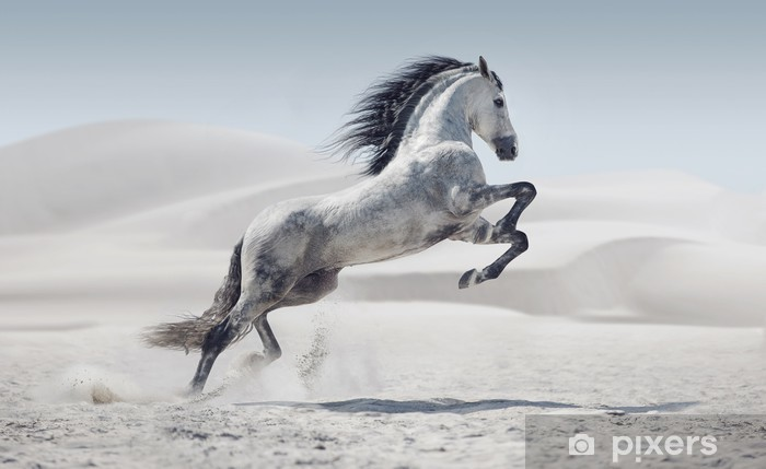 Picture presenting the galloping white horse Washable Wall Mural - Mammals