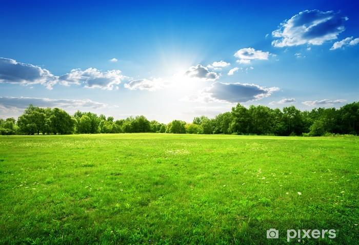 Fototapeta zmywalna Zielona łąka z lasem w tle - Tematy