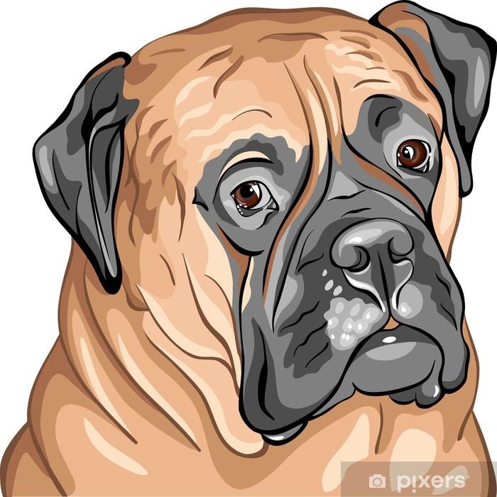 Poster Vecteur closeup portrait de la Bullmastiff de race de chien - Sticker mural