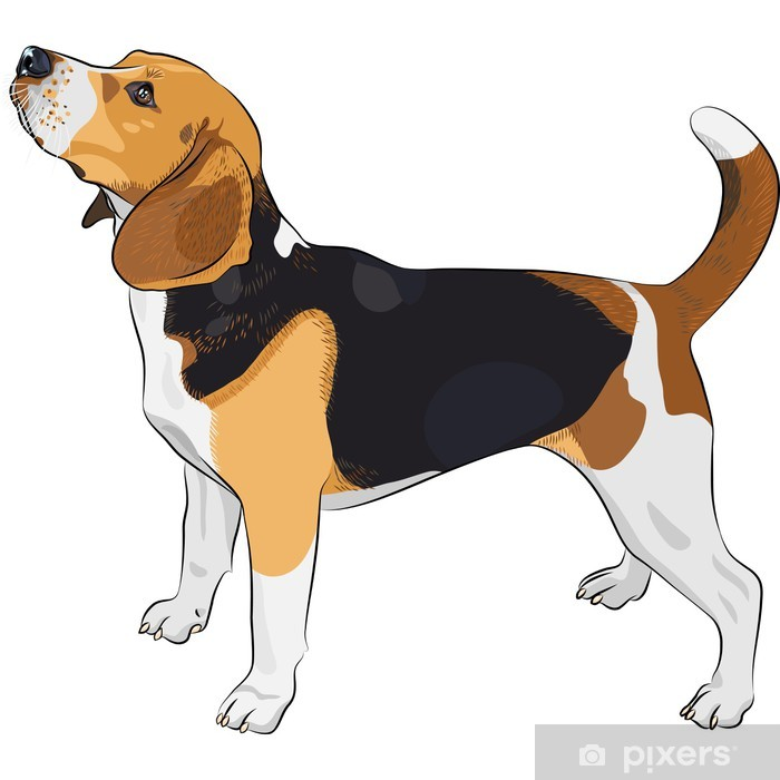 Vinyl Fotobehang Vector schets hond Beagle ras - Muursticker