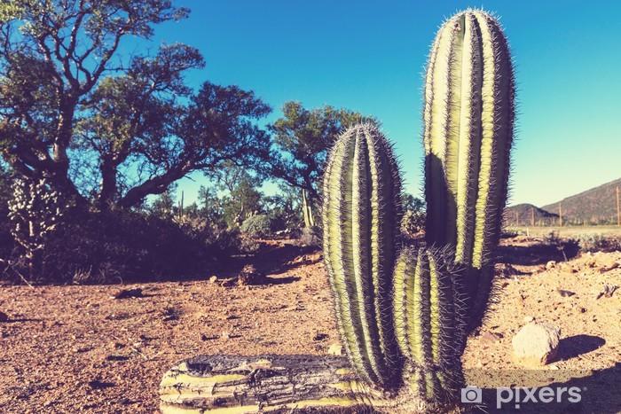 Papier peint vinyle Cactus au Mexique - Amérique