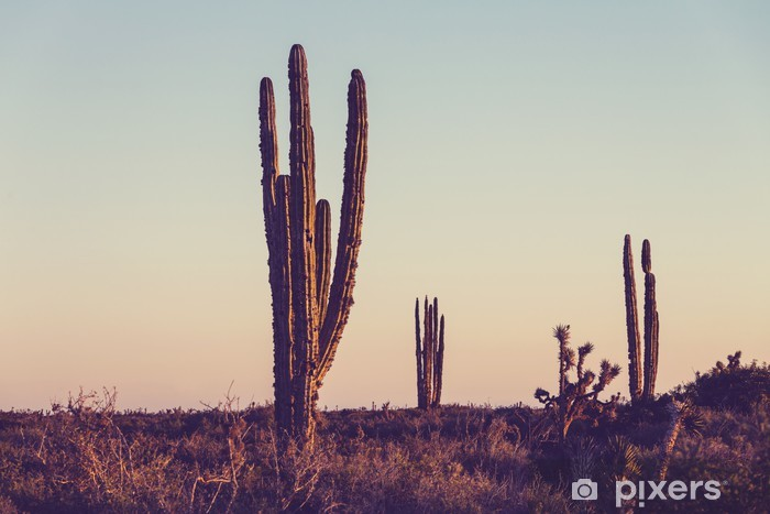 Pixerstick Sticker Cactus in Mexico - Wildernis