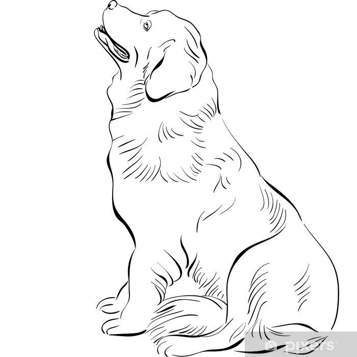 Fototapeta winylowa Vector szkic psa rasy pies siedzi Nowa Fundlandia - Ssaki