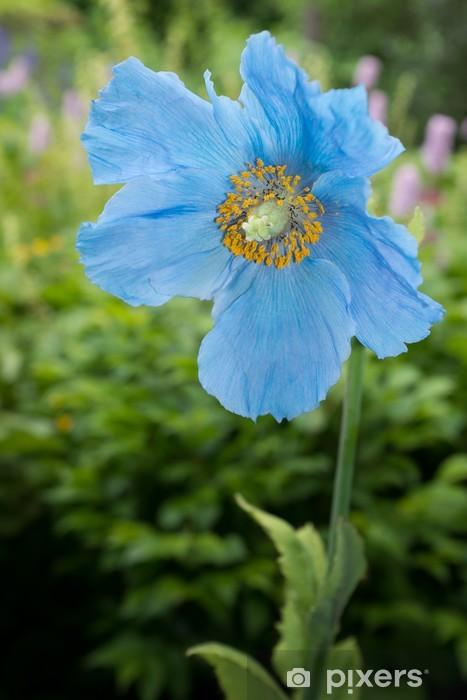 Vinyl-Fototapete Blauer Mohn - Blumen
