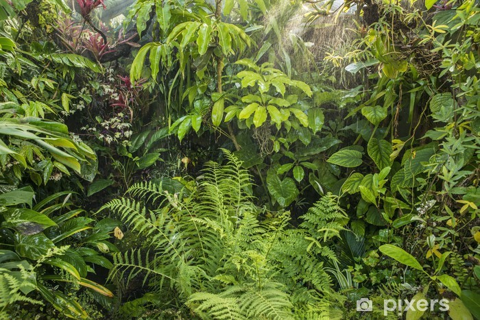 Grøn tropisk baggrund regnskov Vinyl fototapet -