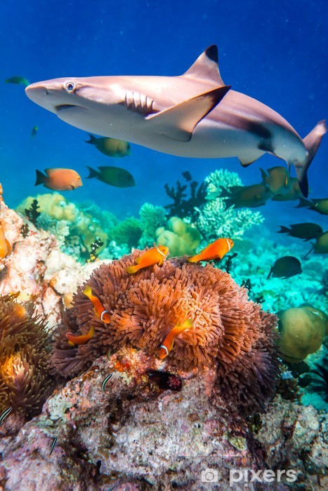 Tropical Coral Reef. Pixerstick Sticker - Sharks