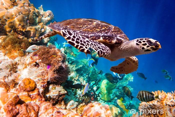 Papier peint vinyle La tortue imbriquée (Eretmochelys imbricata) - Poissons