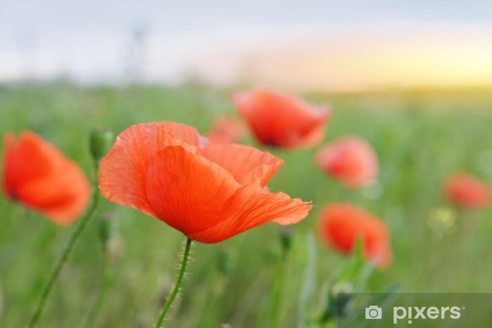 Nálepka Pixerstick Mák květiny - Květiny