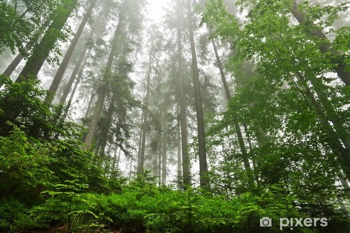Nálepka Pixerstick Hustý les - Témata