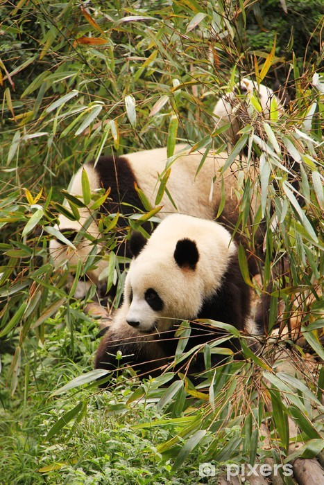 Papier peint vinyle Pandas mangeant - Thèmes