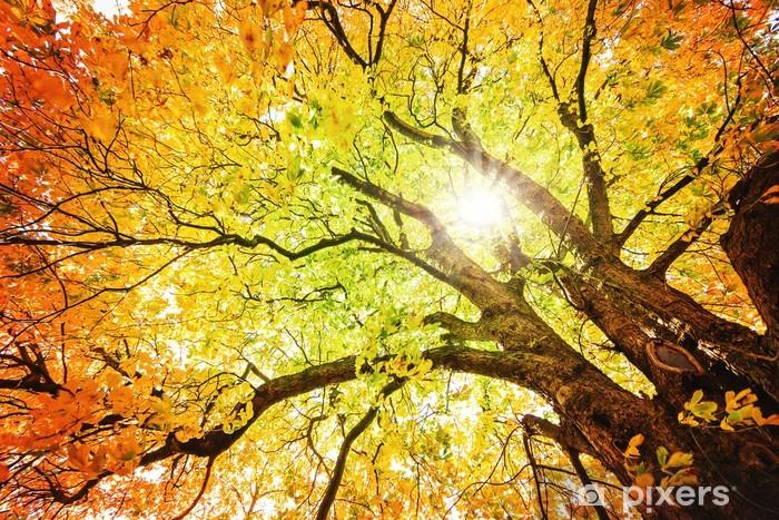 Papier peint vinyle Arbre d'automne - iStaging