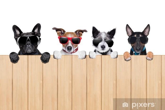 Fototapeta winylowa Duża rząd psów - Ssaki
