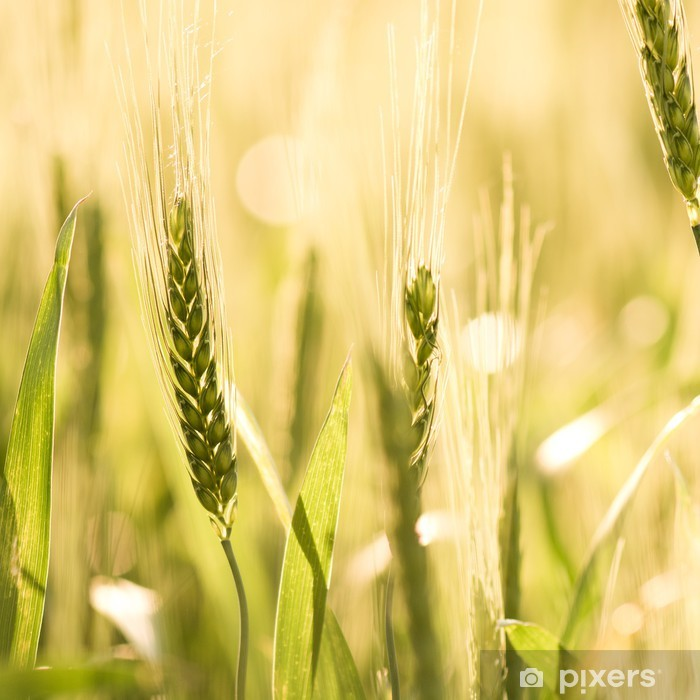 Wheat field Pixerstick Sticker - Themes