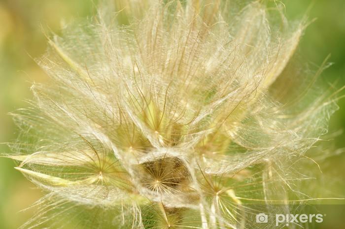 Fototapeta winylowa Big dandelion - Rośliny