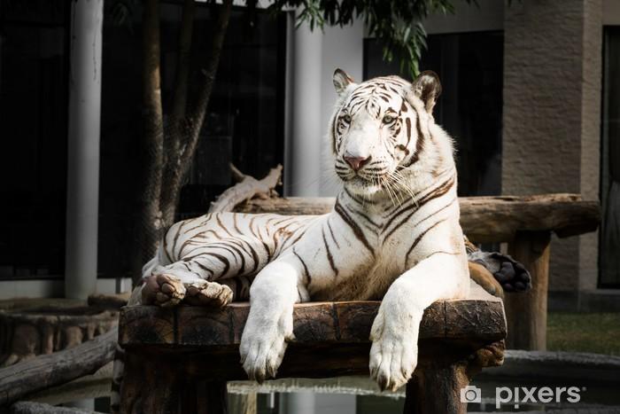 Sticker Pixerstick White Bengal Tiger - Mammifères