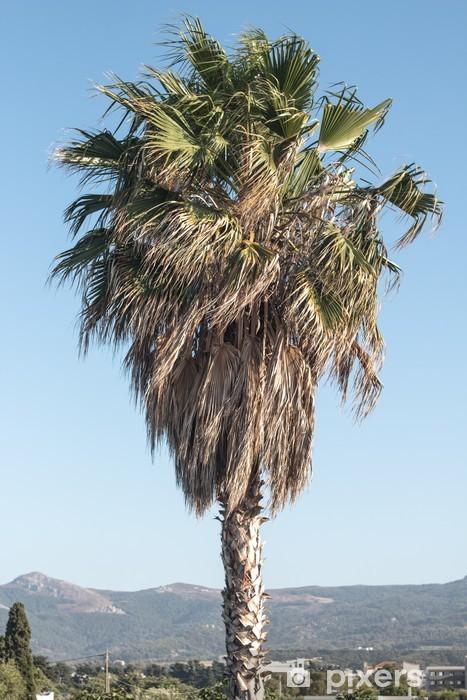 Vinyl-Fototapete Palmtree - Europa