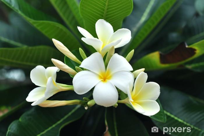 Naklejka Pixerstick Biały lei - Kwiaty