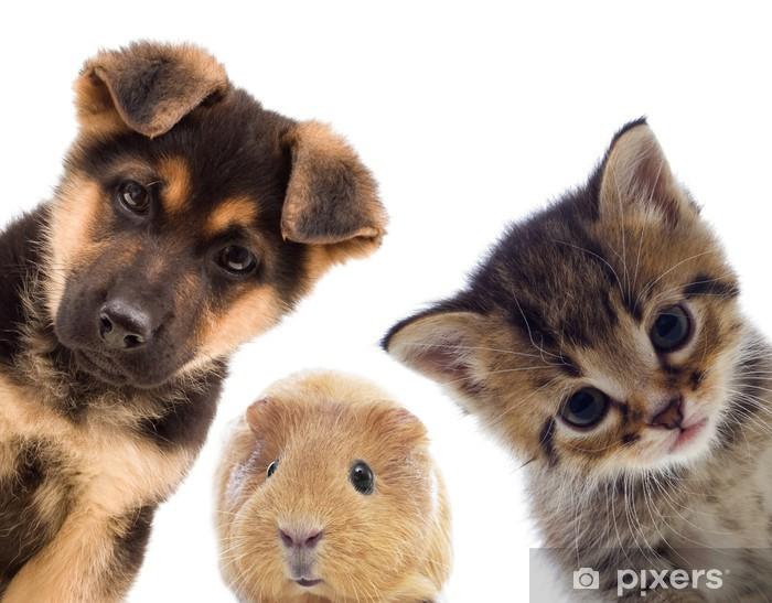 Fototapeta winylowa Puppy kitten i świnka - iStaging