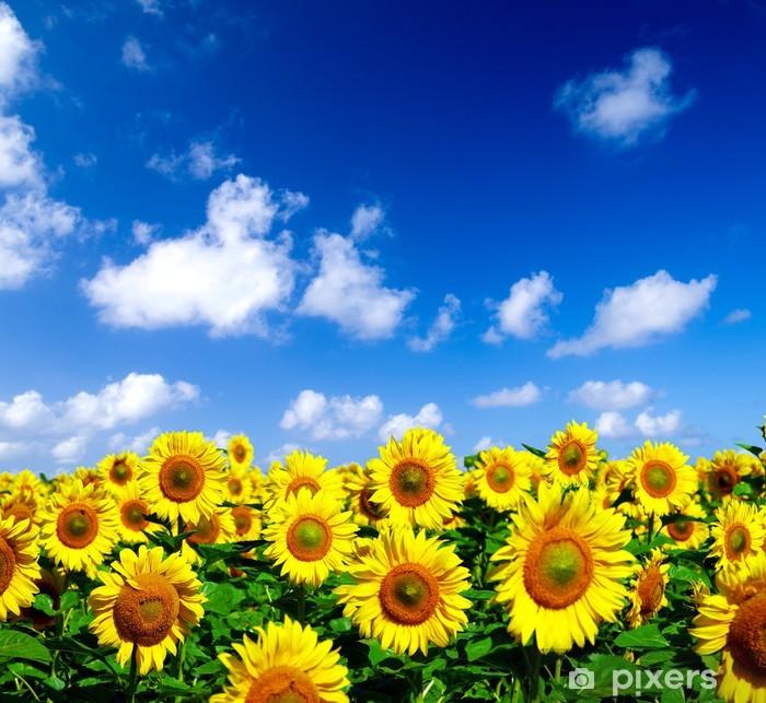 Pixerstick Aufkleber Sonneblumenfeld - Themen