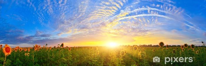 Fototapeta winylowa Pole słonecznika - Krajobraz wiejski