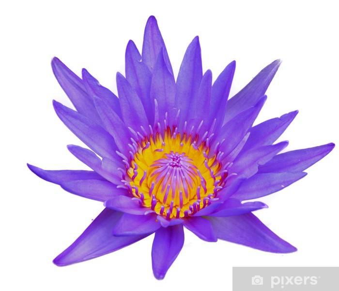 Vinyl-Fototapete Lotusblume auf weißem Hintergrund isolieren - Blumen