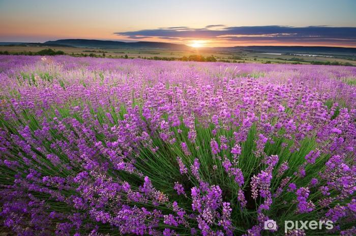 Çıkartması Pixerstick Lavanta Meadow. -