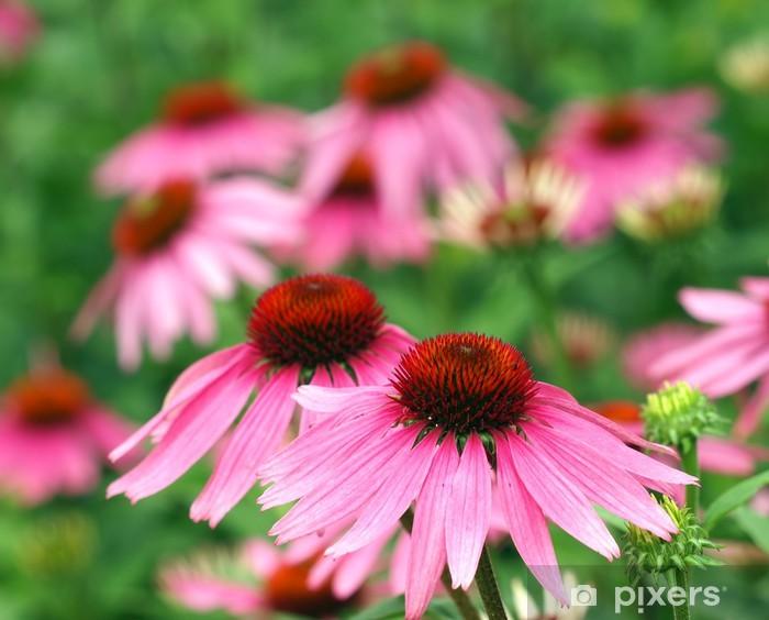 Fototapeta winylowa Piękny różowy - Kwiaty