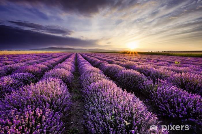 Çıkartması Pixerstick Lavanta Sunrise -