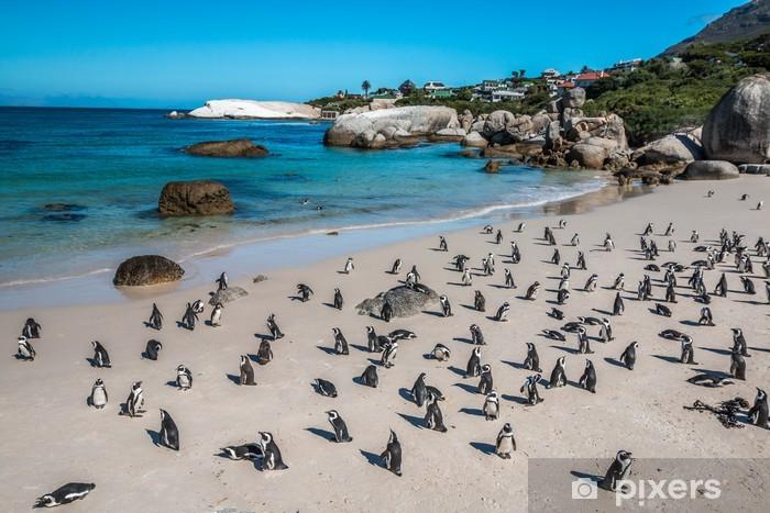 Naklejka Pixerstick Penguin głazy plaży, w pobliżu Cape Town - Afryka