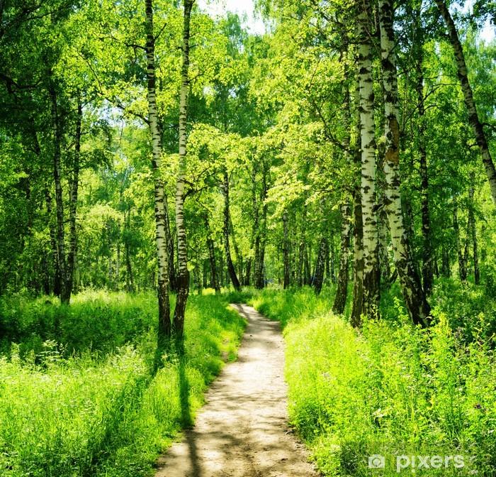 Fototapeta winylowa Brzozowy las w słoneczny dzień. Zielony las w lecie - Las