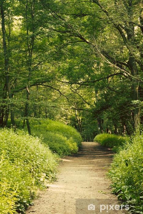 Papier peint vinyle Forêt européenne - Forêt