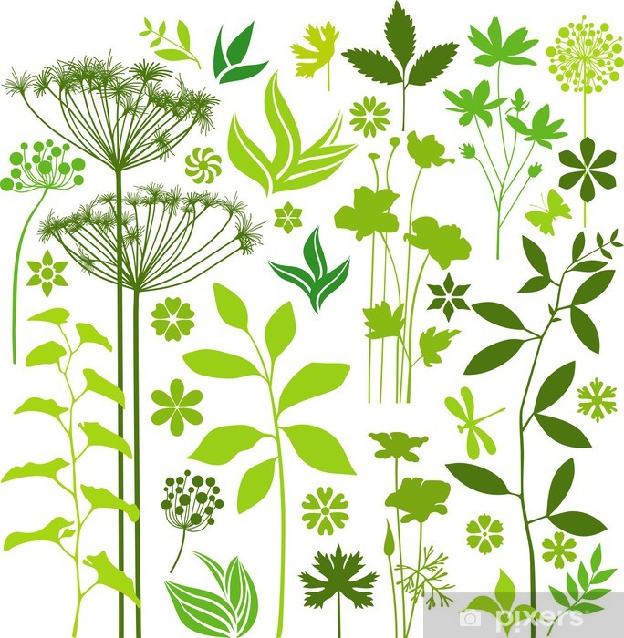 Botany collection Vinyl Wall Mural - Plants