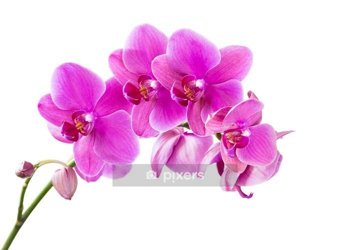 Wandtattoo Orchidee Pixers Wir Leben Um Zu Verandern