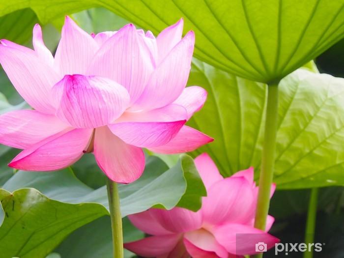 Vinyl-Fototapete Lotus - Blumen