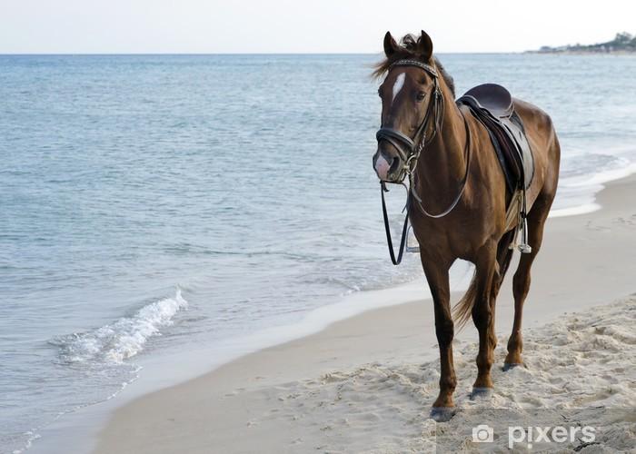 Naklejka Pixerstick Koń na plaży - Tematy