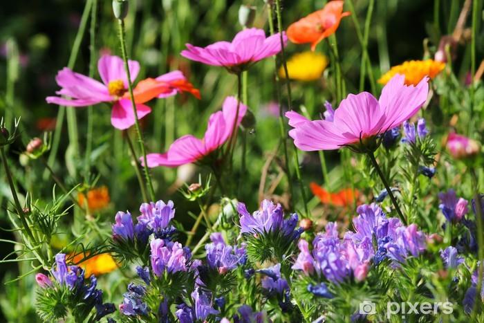 Papier peint vinyle Prairie fleurie avec le cosmos et échium - Maisons et jardins