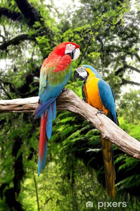 fototapete paar papageien ara im regenwald • pixers® - wir
