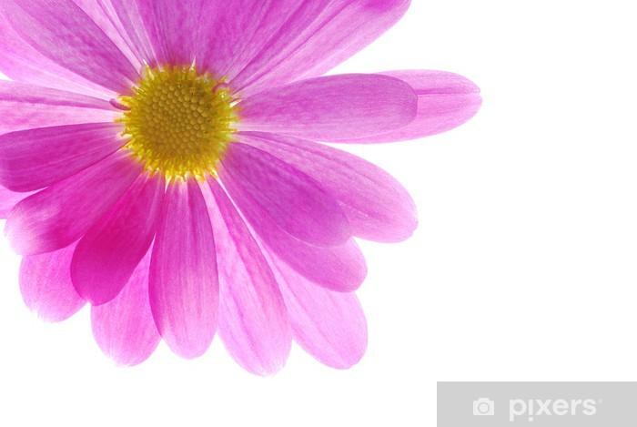 Single Pink Chrysanthemum Wardrobe Sticker Pixers We Live To Change