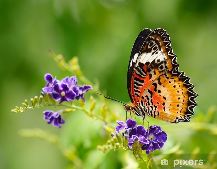 Butterfly on a violet flower Vinyl Wall Mural - Themes