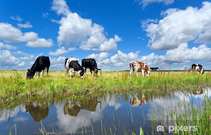 Vinyl Fotobehang Koeien op de weide door de rivier over de blauwe hemel - Thema's