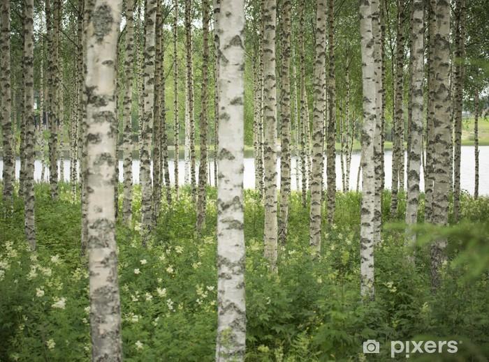 Vinyl Fotobehang Birkenwald - Schoonheid en Lichaamsverzorging