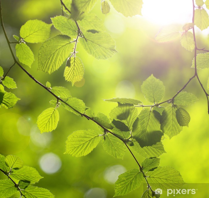 Sticker Pixerstick Forest Green feuilles des arbres - Thèmes