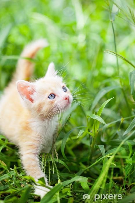 Fototapeta winylowa Mały czerwony kot - Tematy