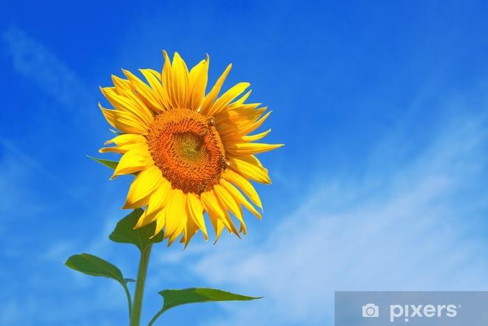 Vinyl-Fototapete Sonnenblumen auf dem Feld - Themen